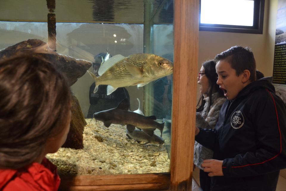 Semana do Meio Ambiente segue com atividades nas escolas
